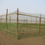 Enclosure to protect Turtle Nests